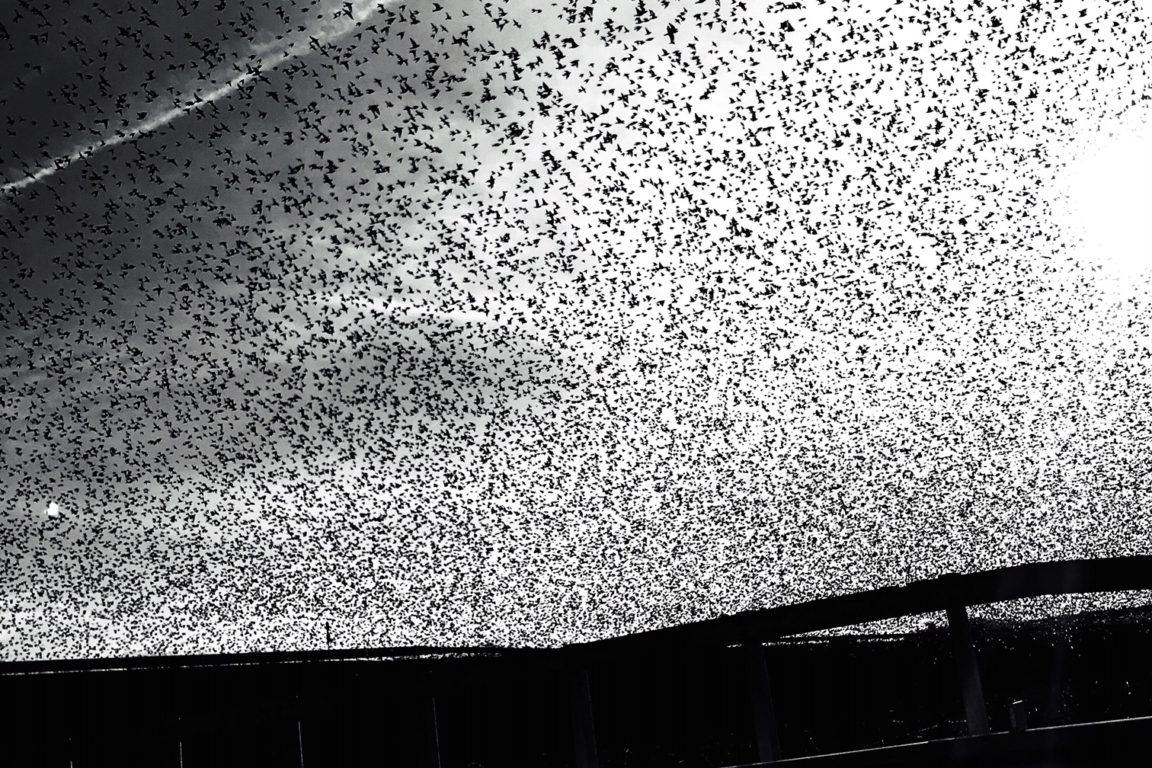 foto Il coronavirus invisibile, la fragilità della modernità evidente