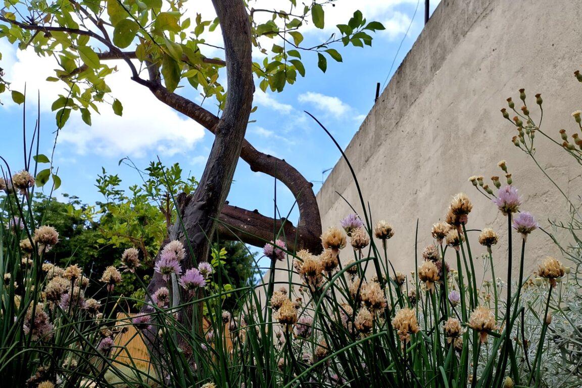 foto C'è un giardino chiaro